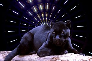 Black panther sitting on a log with a futuristic light behind it.