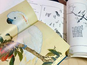 Paintings from Niaopu and Jieziyuan